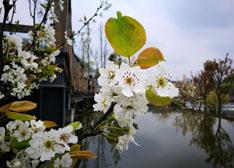 【泸州游】人间最美四月天 不负春光与美酒